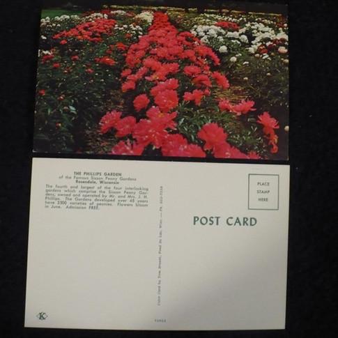 """The Phillips Garden"" Original Post Cards"