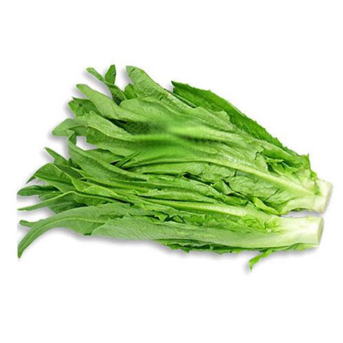 Indian Lettuce (Mustard Cabbage)
