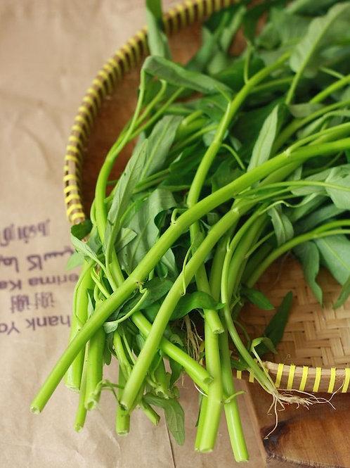 Water Spinach (Ong Choy, Kan Kong, Morning Glory)