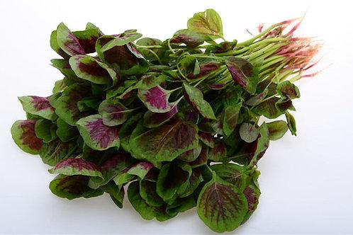 Amaranth (Red Spinach)