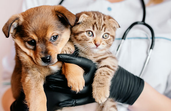 Shutterstock%20image_puppy%20and%20kitte
