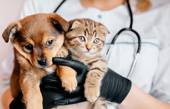Shutterstock image_puppy and kitten held