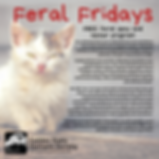 NFG Feral Friday website (1).png