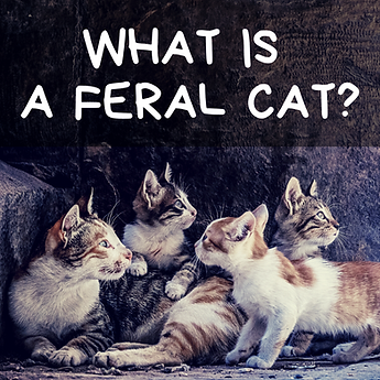 Feral Fridays - WIX.png