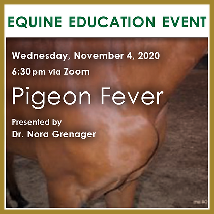 Pigeon Fever Virtual Client Education Ev