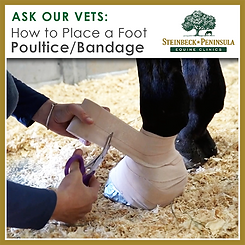 AOV-Foot Poultice How-to Box-01.png