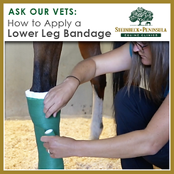 AOV-Lower Leg Banage How-to Box-01.png