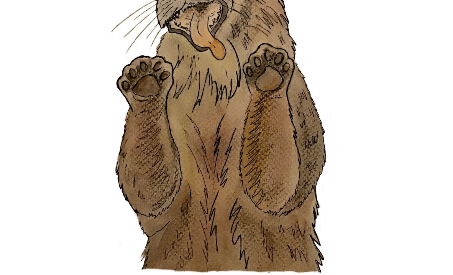 Otter Eejit.jpeg