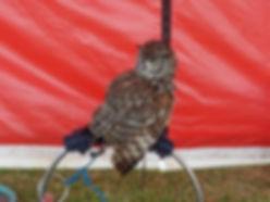 Owl - For website use.jpg
