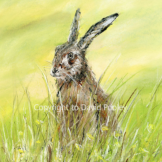 The Hare That Stared