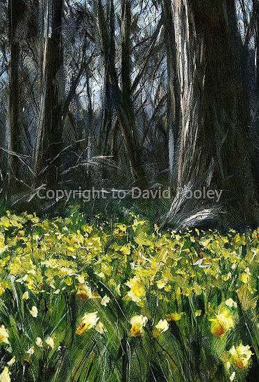 Daffodil Woods