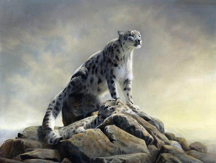 Majestic Predator