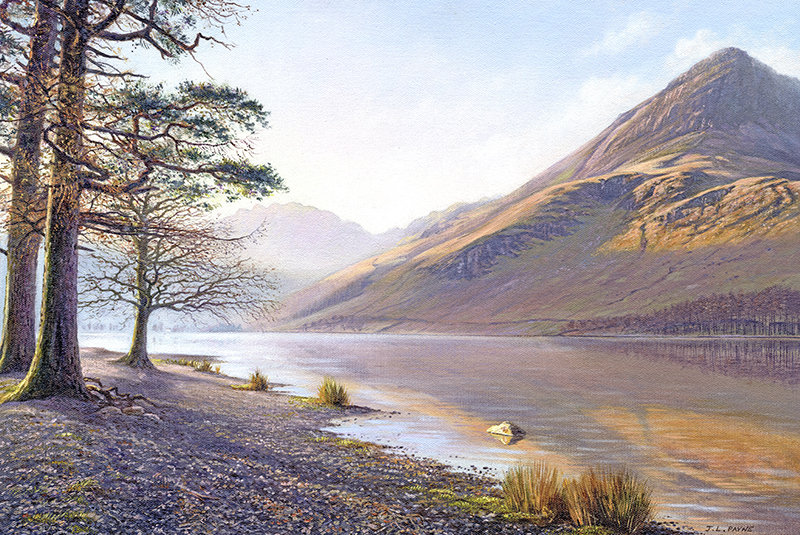 Buttermere Pine Tree