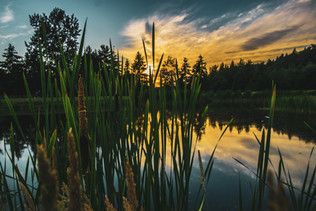 Golf pond sunset