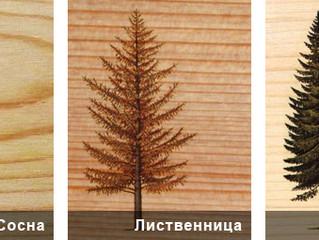 Про древесину