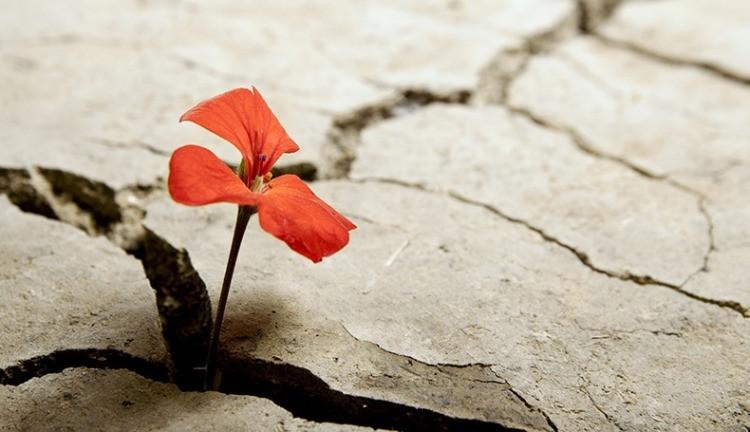 Un fiore che cresce nella terra arida