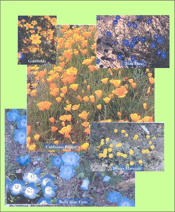 wildflower_collage.jpg