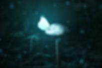 Pilz mit Schmetterling Art of Moments.pn