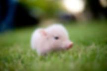 animaux-cute-17-L.pngML.jpg