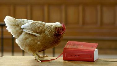 Visuel_film1_Droit-animaux-poule-2.jpg