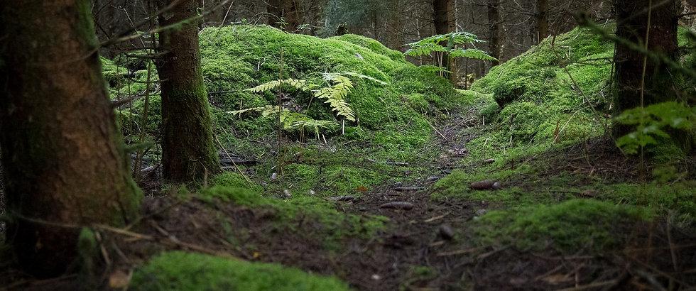 cropped-chemin-foret-mervent.jpg