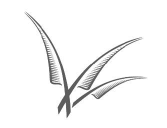 feathers copy no background.png
