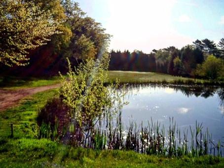 Golf Membership deals in Westerham, Kent