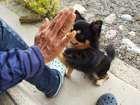 愛犬の行動が変わり、理想の生活を実現できた人の特徴