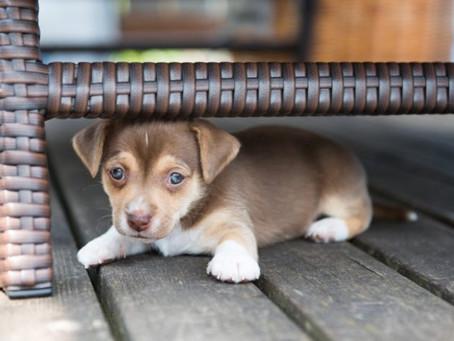 『他人を怖がる犬』の飼い主の特徴