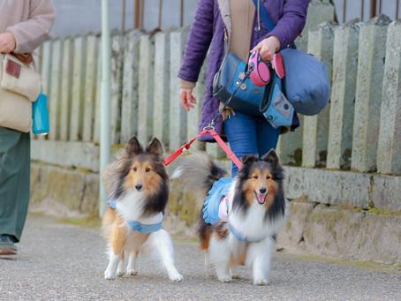 【犬の散歩】犬同士の挨拶って必要?
