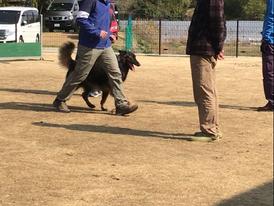 オビディエンス競技会IN神戸