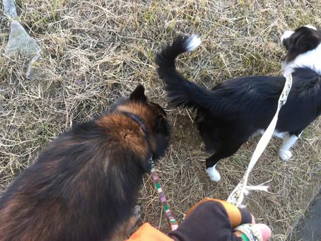 散歩中に他の犬に吠える