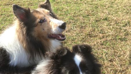 散歩中に他の犬と出会ったらどうするべきか?