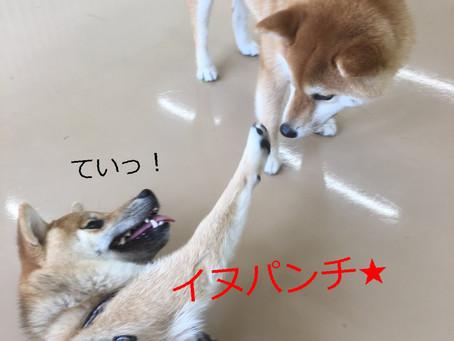 かじり癖矯正への第一歩★