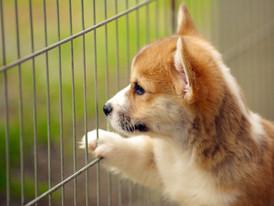 もちろん子犬の社会化は大事なのです・・が!