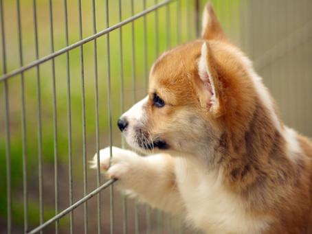 子犬の時の体験は一生もの