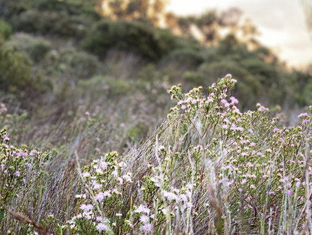 late spring walking - blackheath