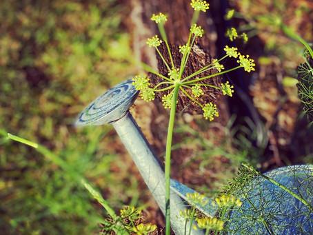 Autumn in the garden in Byron Bay