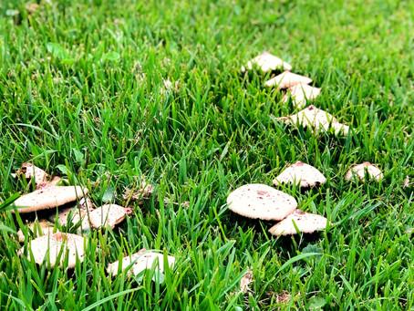 A world of fungi - close to home