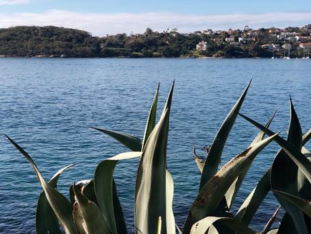 Covid kayaking - Sydney winter