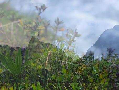 Alpine observations