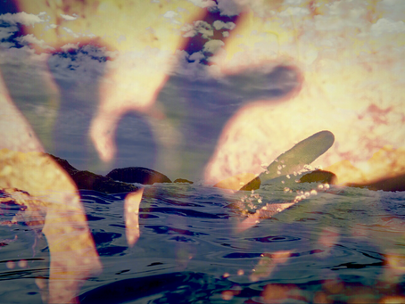 Kelp Culture