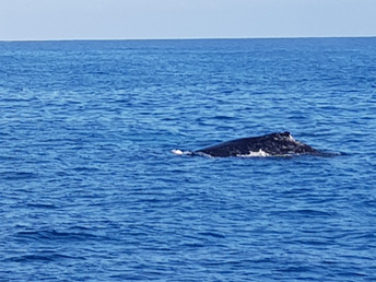 whales in season