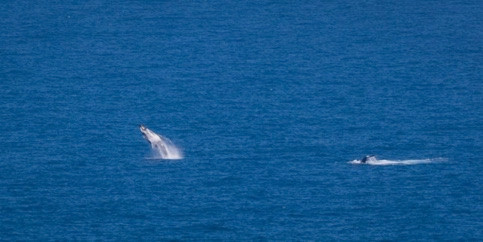 Whale encounters