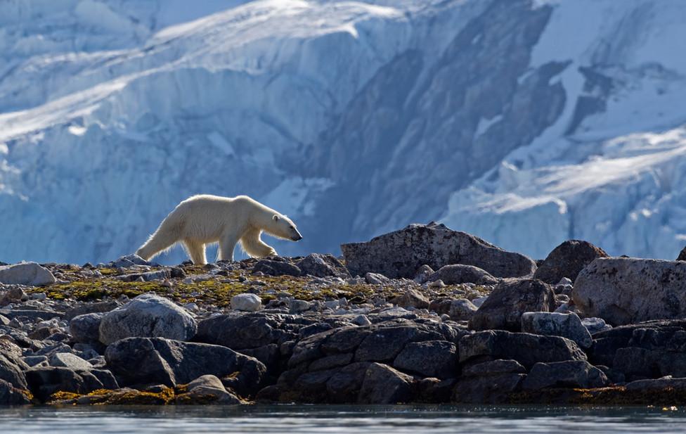 01 Polar Bear.jpg