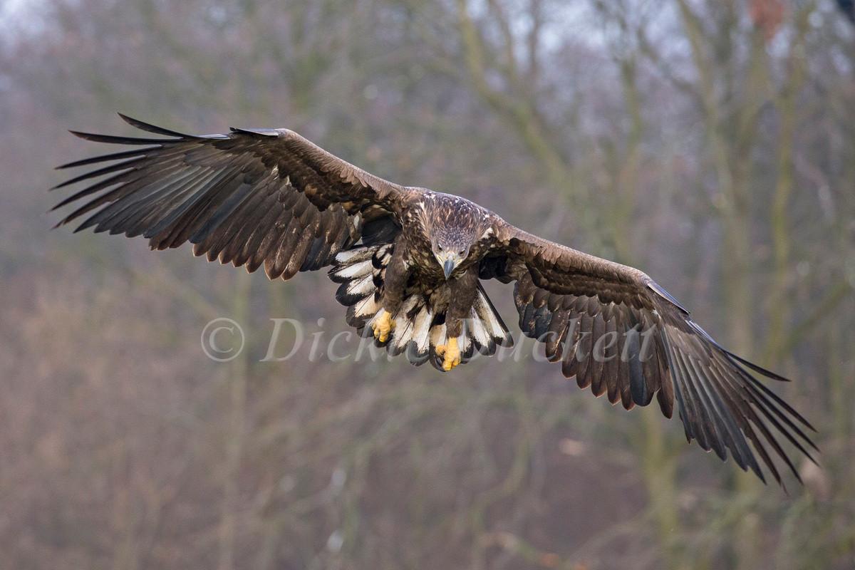 _H2P2403 Eagle approach.jpg