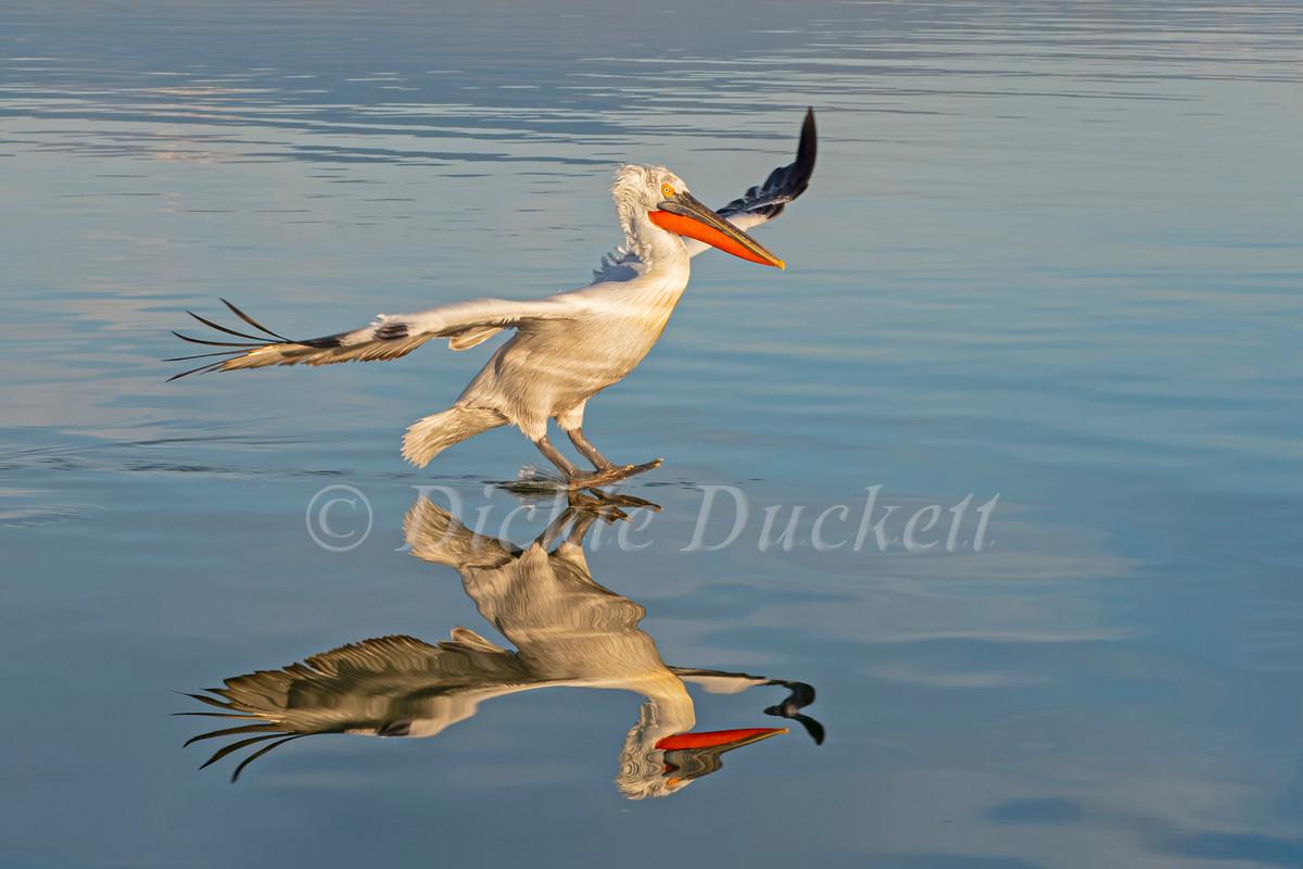_1311898 Dal Peli landing + reflection.j