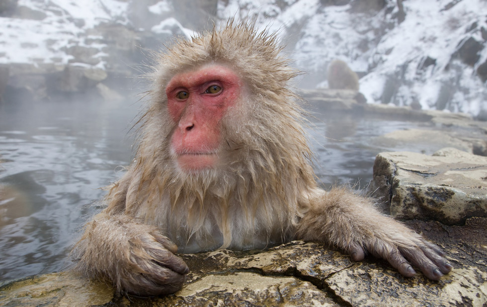 _X0A9598 Monkey in pool