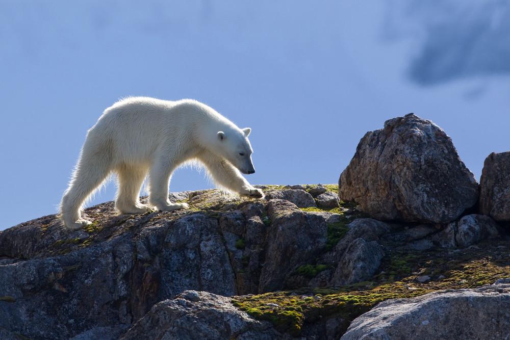 02 Polar Bear.jpg