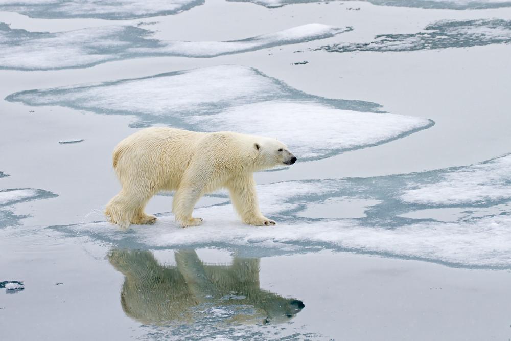 10 Polar Bear.jpg